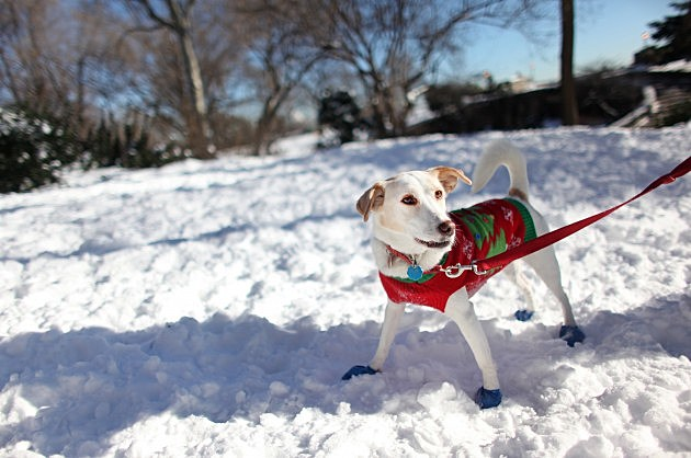 Safety Tips Fore Pets In Cold Weather