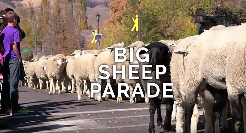 Photo: YouTube via Trailing Of The Sheep