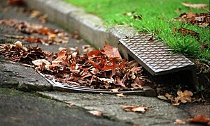 Autumn leaves block a drain on Ponsonby's Franklin